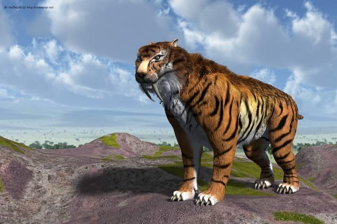 sabertooth tiger smilodon fatalis by ndelphi-d4tz7vo