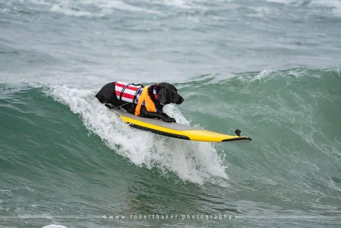 2019 Surf City Surf Dog Event