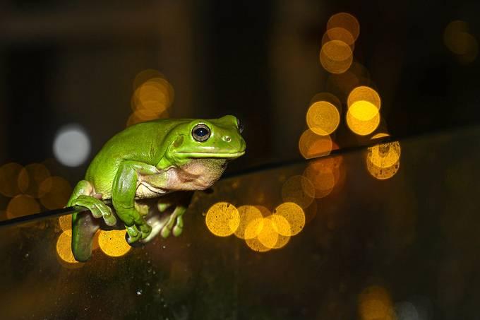 frog2 copy