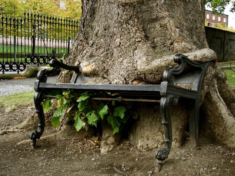 tree eating a bench