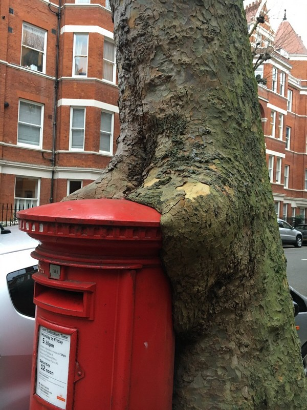 tree eating a postbox