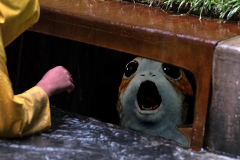 Porg down the drain