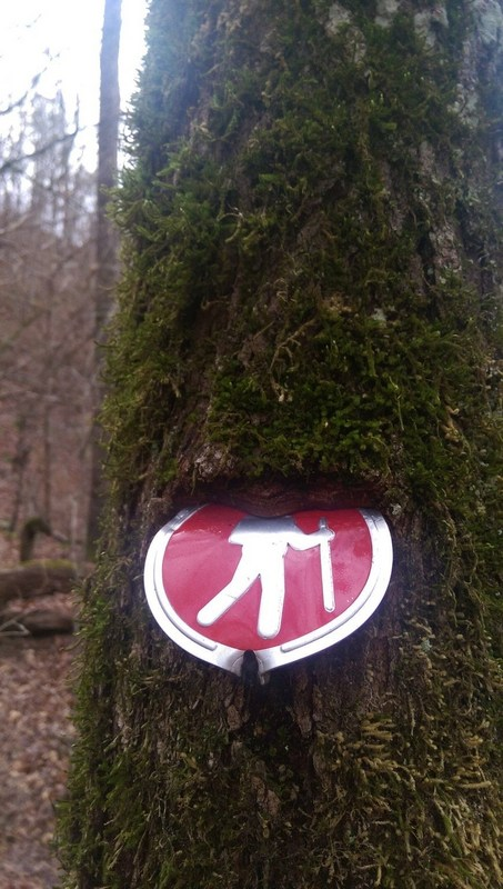 tree eating a hiking sign