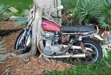 tree eating a motorcycle