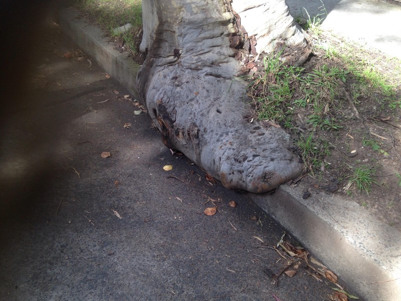 Tree eating a pavement