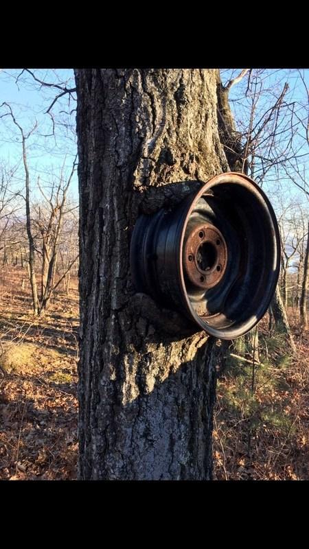 tree eating a wheel