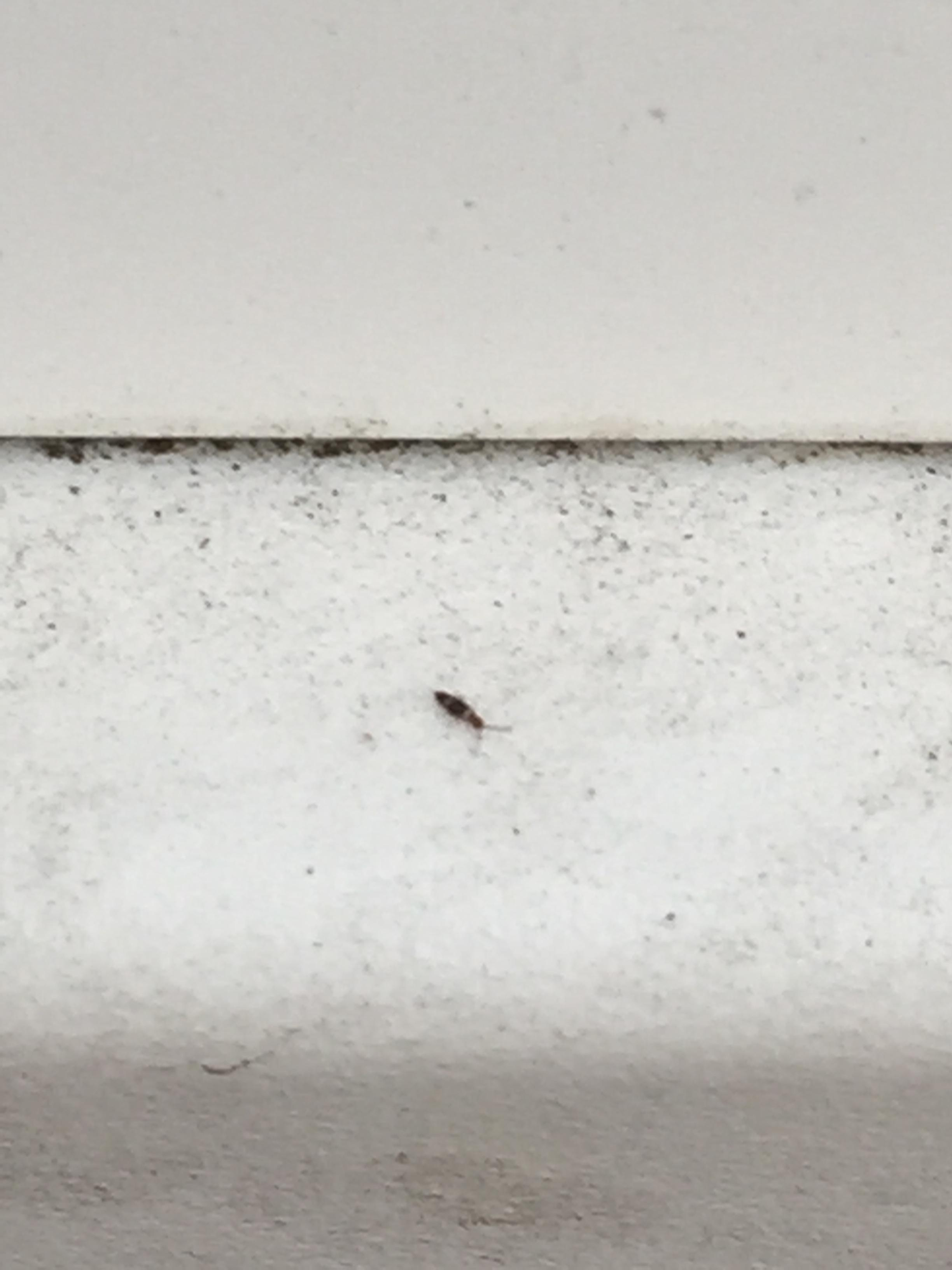 Tiny Grey Bugs In House Architectural Designs