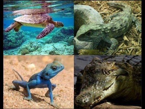 Contoh Hewan Vertebrata Dan Avertebrata Beserta Penjelasannya